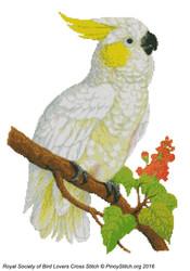 RSBL Cockatoo Lemon Crested