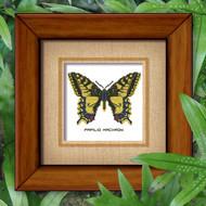 Butterfly Pattern 803