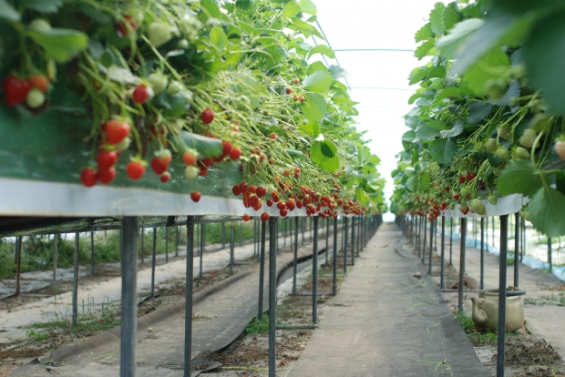 What Are The Best Winter Hydroponic Crops Dealzer
