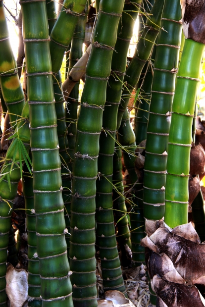 How To Build A Bamboo Hydroponic System Dealzer