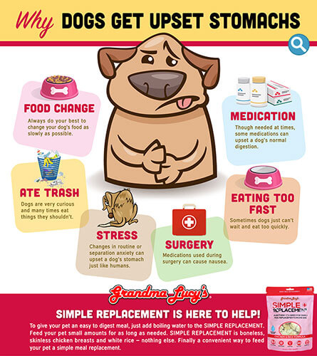 What Upsets Your Dog's Stomach
