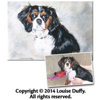 Louise Duffy Commissioned Pet Portrait in Oil