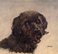 Oil Labradoodle