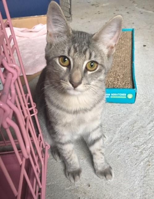 Willow's Kitten