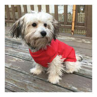 Fashion Pet Classic Dog Sweatshirt