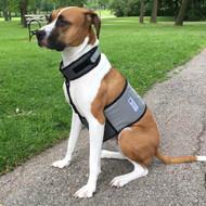 Cooler Dog Cooling Vest and Collar