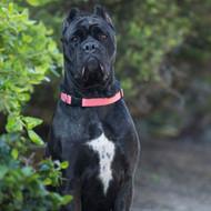 Lupine ECO Series Large Dog Collars