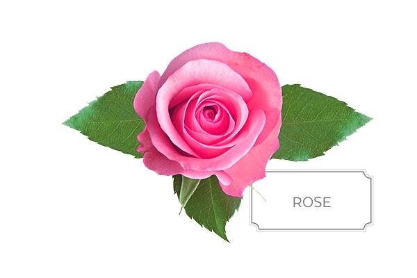 rose-a.jpg