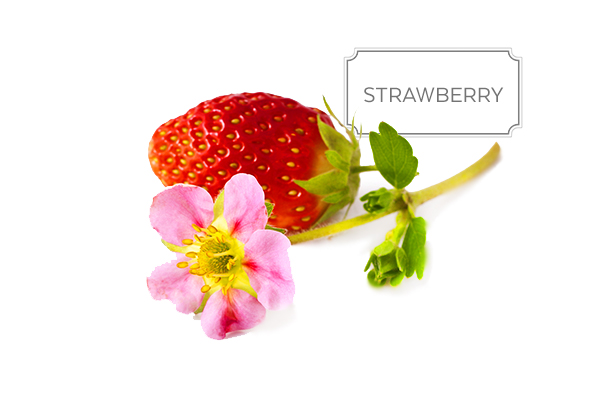 strawberry-a.jpg