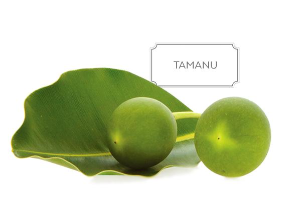 Tamanu Oil In Cosmetics And Skin Care