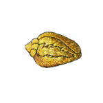 Iron On Patch Applique - Metallic Gold Shell