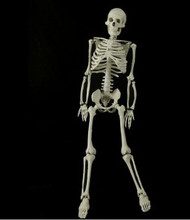Mr Thrifty 4th Quality Skeleton Halloween Prop