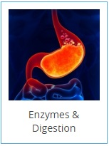 enzymes-digestion-2-.jpg