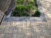 Fertilizer Rust Stains over colored pavers
