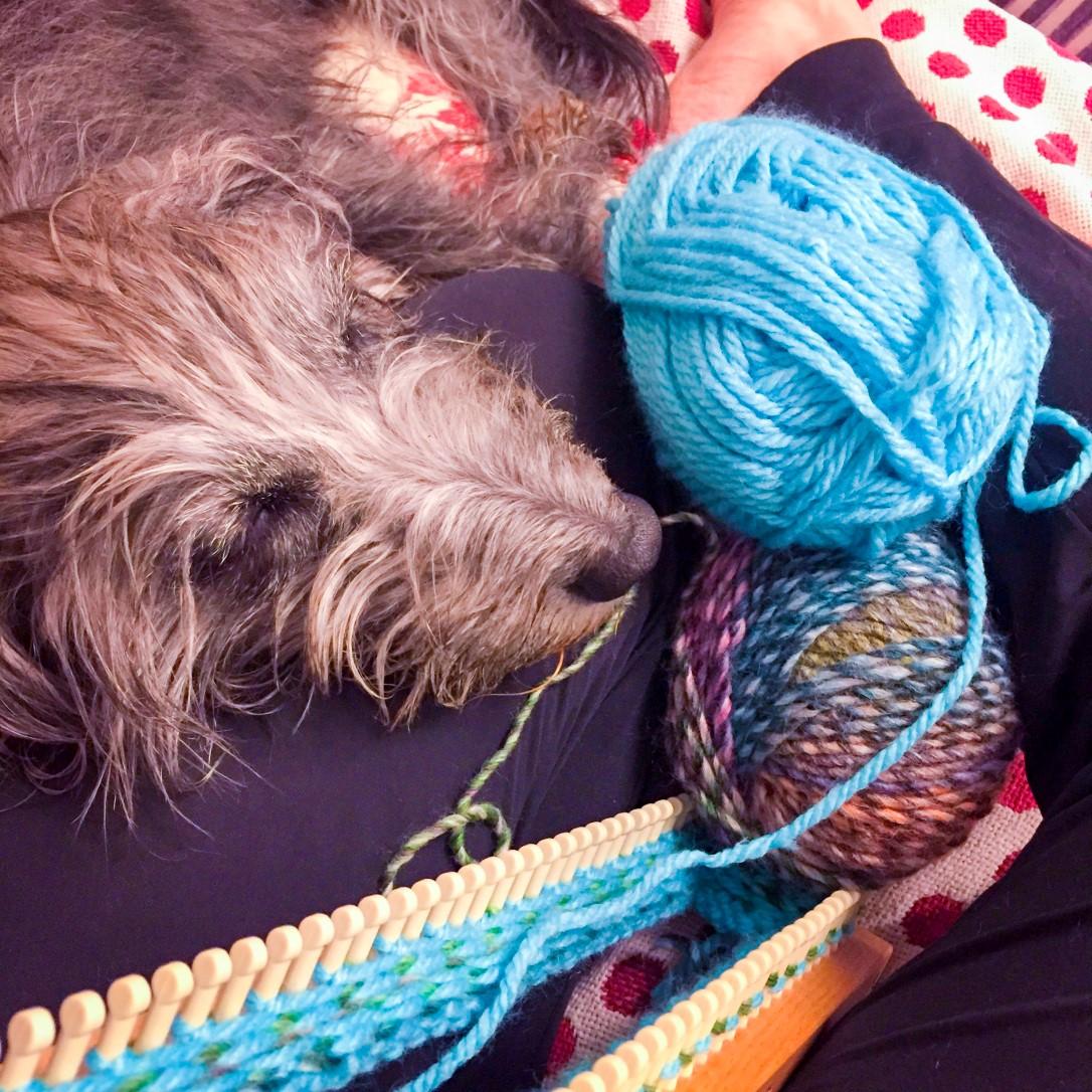 Jess the dog resting while I knit with Adriafil Zabrino