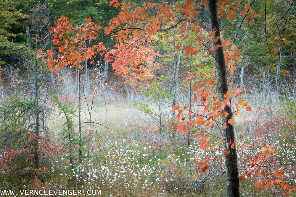 Early Autumn - Walden Woods