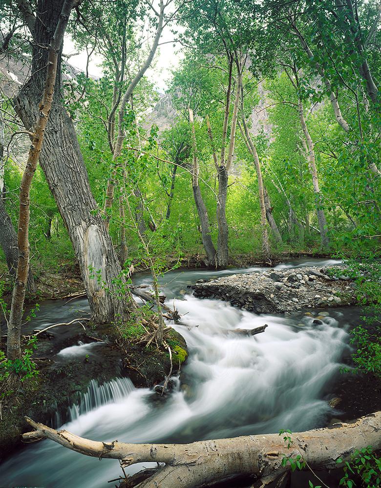 McGee Creek Springtime
