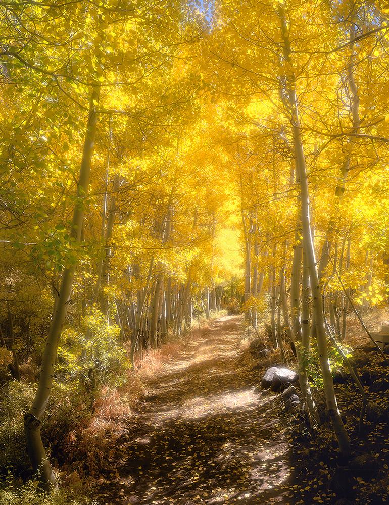 Parcher's Lane Autumn Aspen