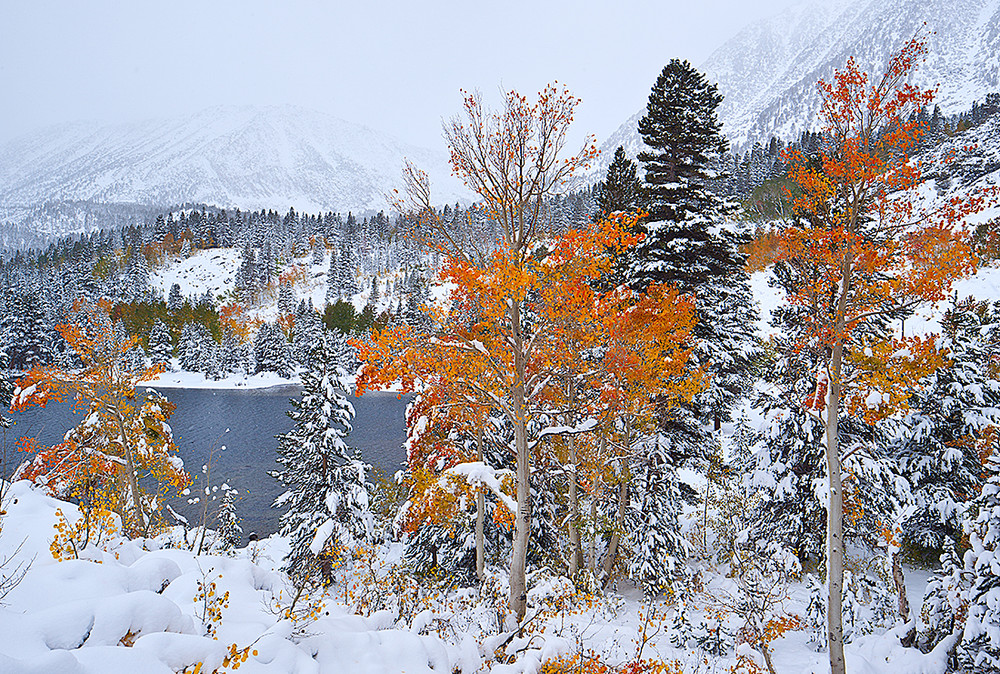 First Snowfall and Rock Creek Autumn Aspen