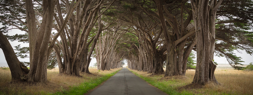 Cypruss Tunnel at Point Reyes National Seashore