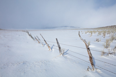 Winter Fence - Eastern Sierra