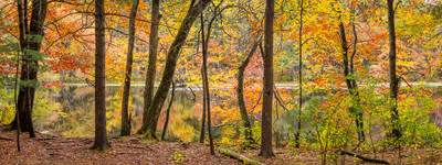 Autumn Panoramic in the Estabrook Woods