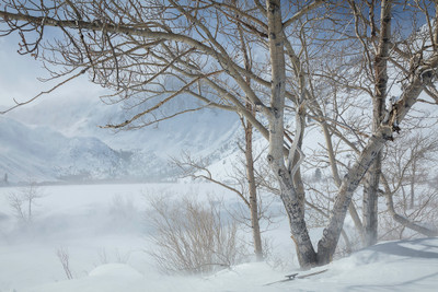 Winter Aspens at Convict Lake