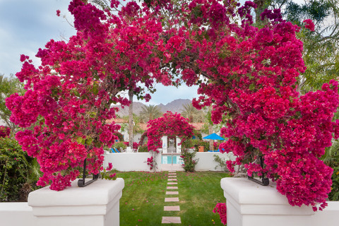 Bougainvillea, La Quinta Hotel,        and more from Mammoth and the High Sierra