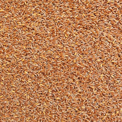 ORGANIC EMMER FARRO, kernels
