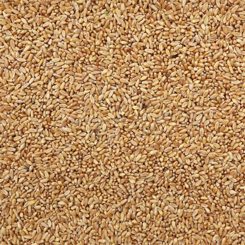 ORGANIC SOFT WHITE WHEAT, kernels