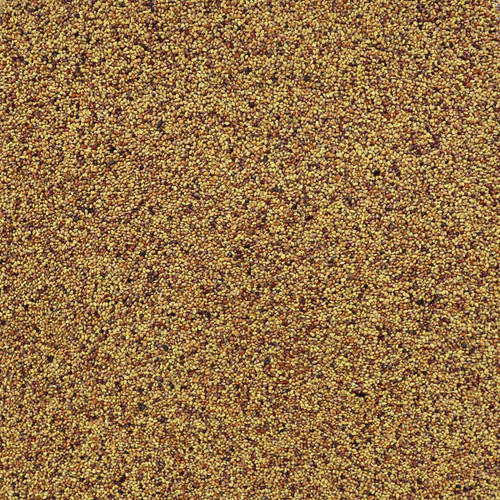 ORGANIC RED CLOVER SEED