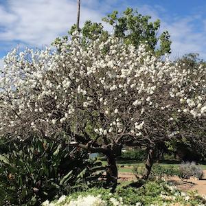 flowers-riverview-st-ignatius-garden.png
