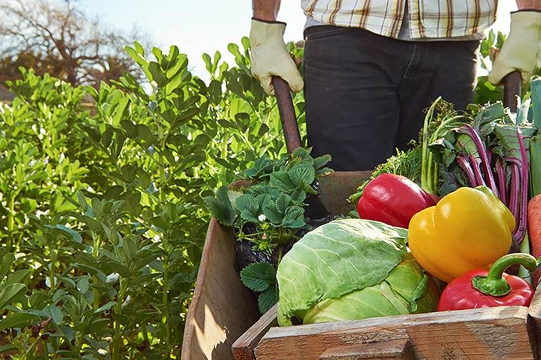sustainable-food-industry.jpg