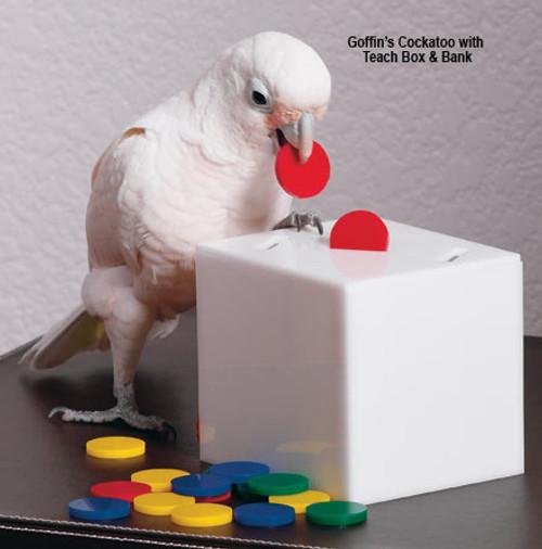 Teach Box & Bank Parrot Toy - Medium