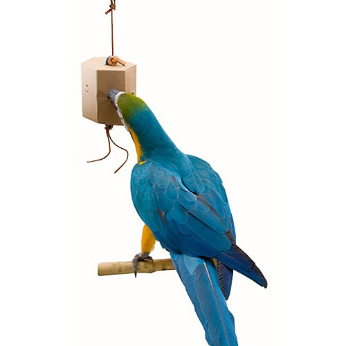 Seek `n` Find Foraging Box for Large Parrots
