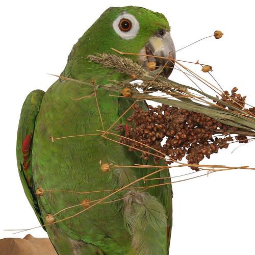 Naturals Pick 'n' Fly - 130g - Treat for Pet Birds & Parrots