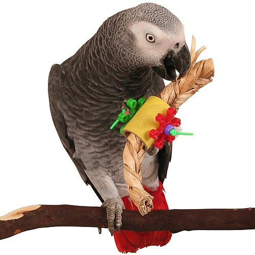 Pigtails Foot Toy for Parrots