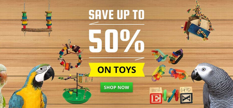 Save up to 50% on Parrot Toys, Food, Treats and Supplies