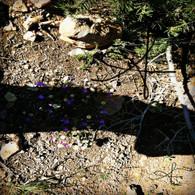Grand Canyon Shadow on Path