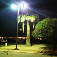 Mesa Airport Palm Tree