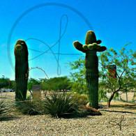 Cacti Mesa