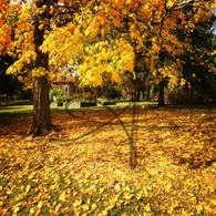 Crapo Park Autumn Leaves