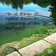Nature Marvelous 8x10