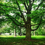 Crapo Park Trees View