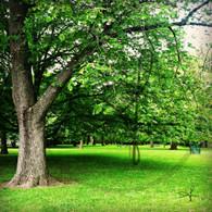 Crapo Park Tree Line