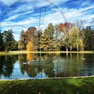 Autumn Geese on Starker