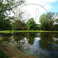 Reflections on Lake Starker