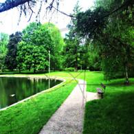 Lake Starker Geese Bench Path