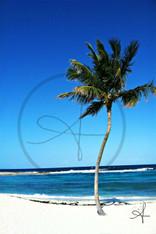 Bahamas Beach Palm Tree 11x14