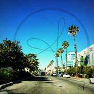 Santa Monica Palm Tree Street